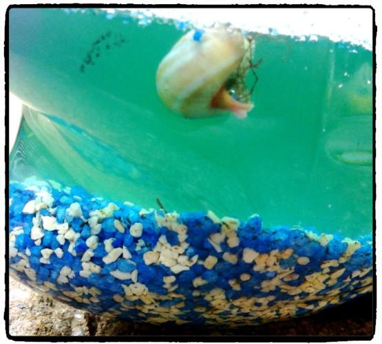 Le mer en bouteille