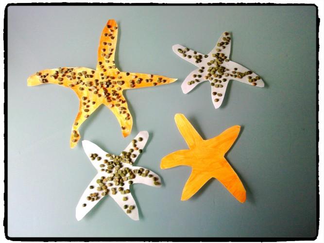 Des étoiles de mer