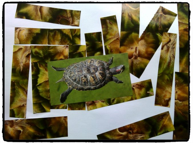 Serpent, tortue, lion et dauphin : collage