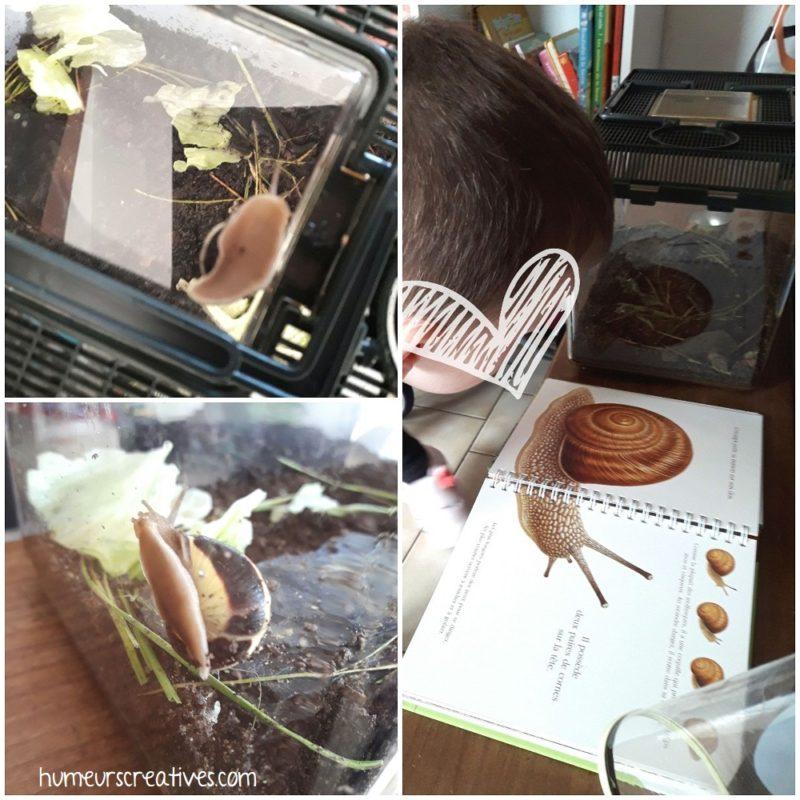 découverte et observation des escargots dans le terrarium et sur le livre découvertes