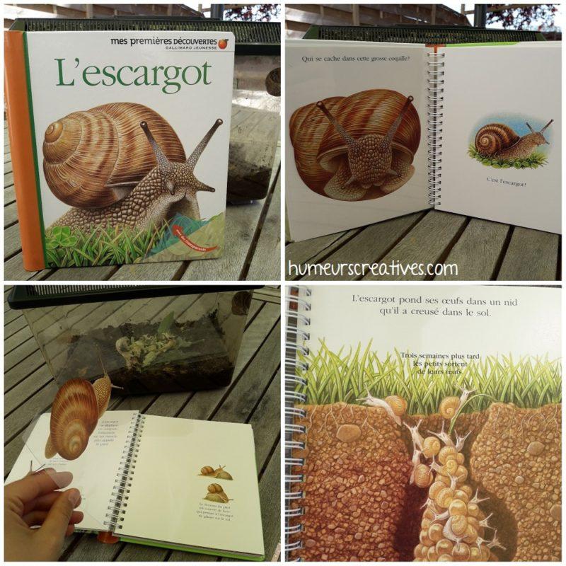 Livre L'escargot, mes premières découvertes