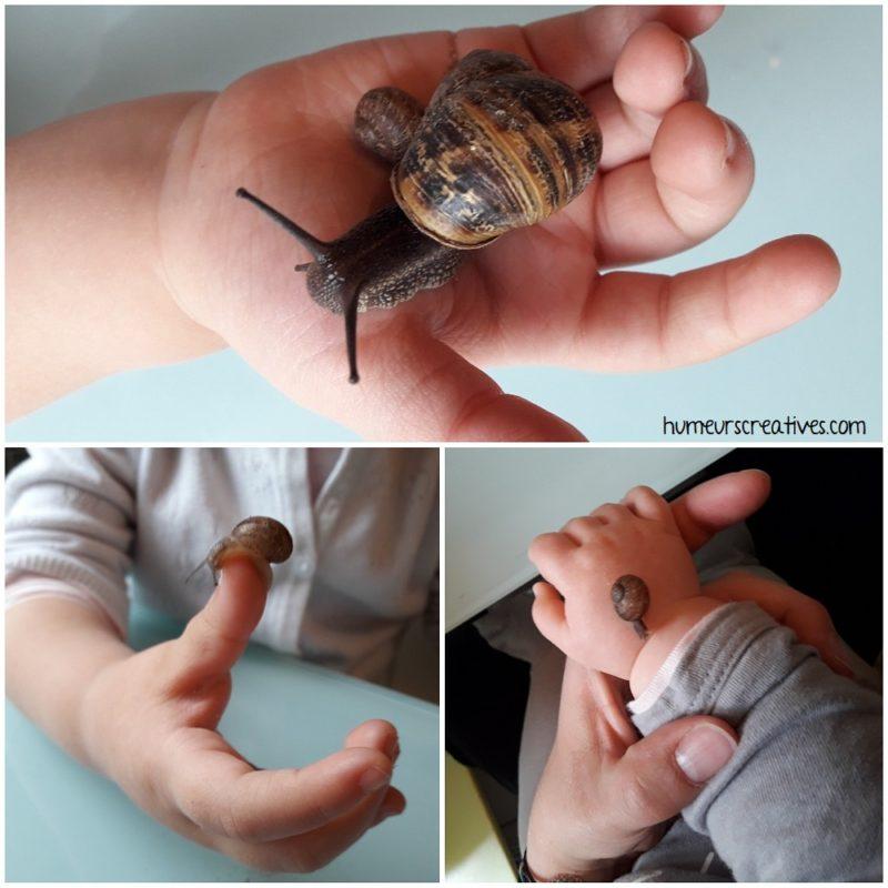 les enfants ont pris les escargots dans leurs mains. Moment sensoriel