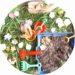 bac sensoriel pour enfant sur le printemps