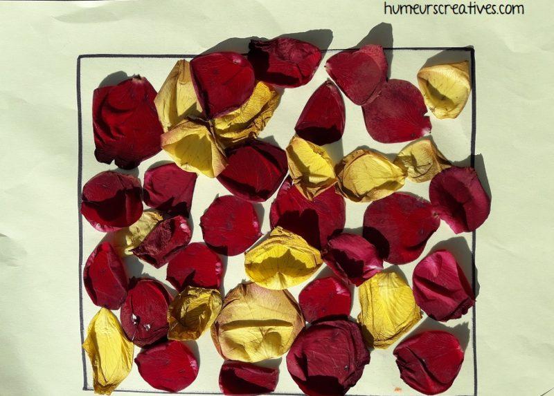 collage de pétales de roses sur une feuille