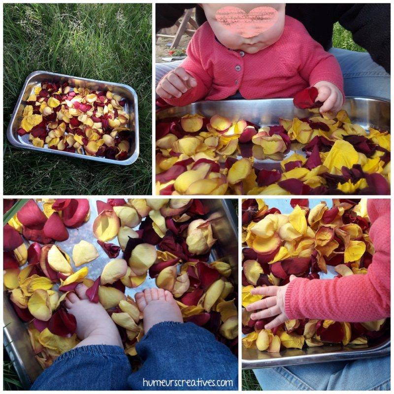 activité sensorielle pour enfants avec des pétales de roses