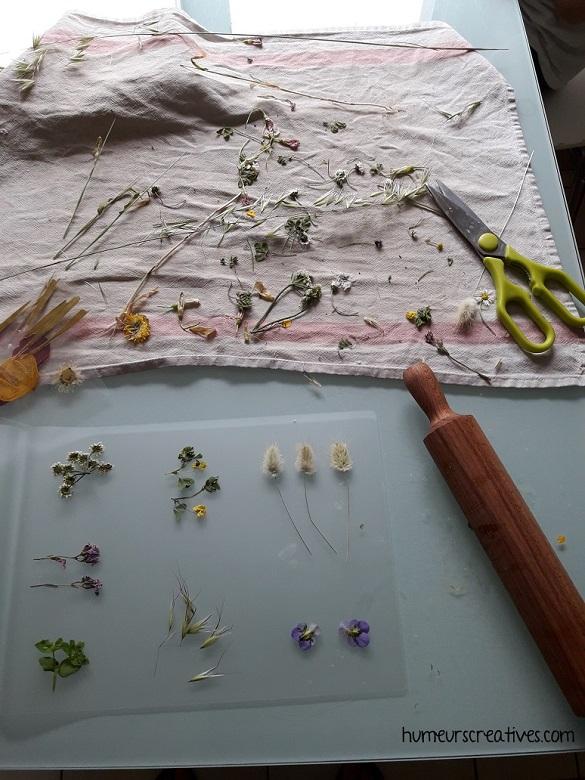 récolter des fleurs pour les plastifier