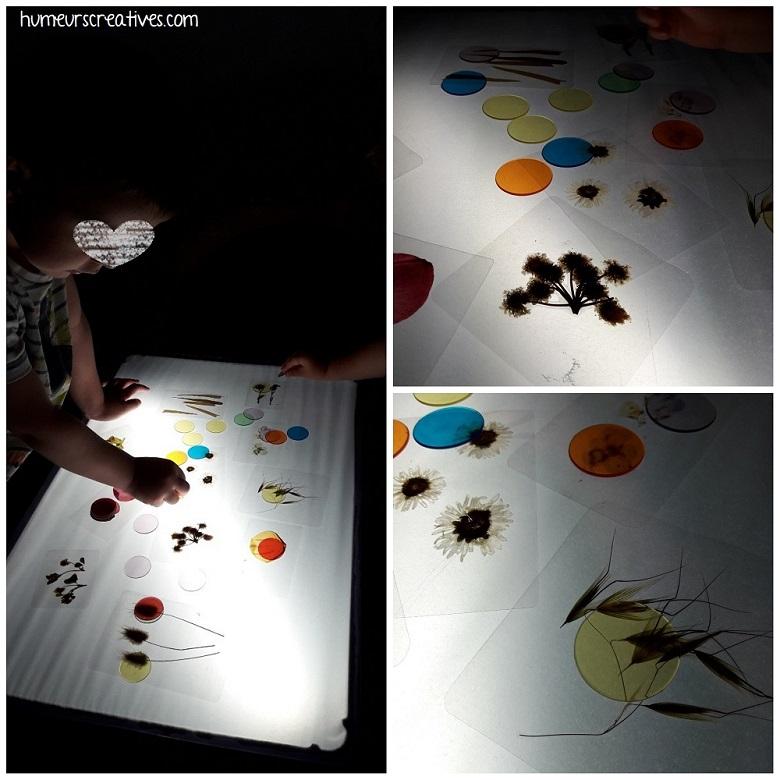 activité table lumineuse : observation des fleurs