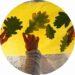 activités d'automne pour les enfants : collage de feuilles d'automne sur fenetre
