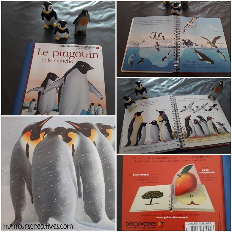 livre sur les pingouins et les manchots, mes premières découvertes des éditions gallimard