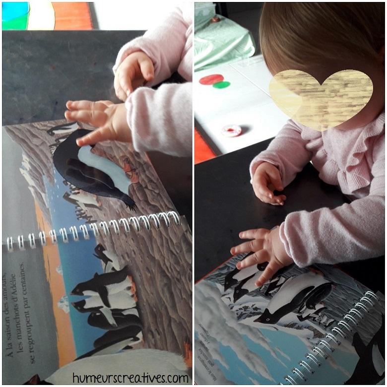 livre sur les pingouins, mes premières découvertes des éditions gallimard jeunesse