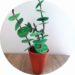 Fabriquer une plante en carton